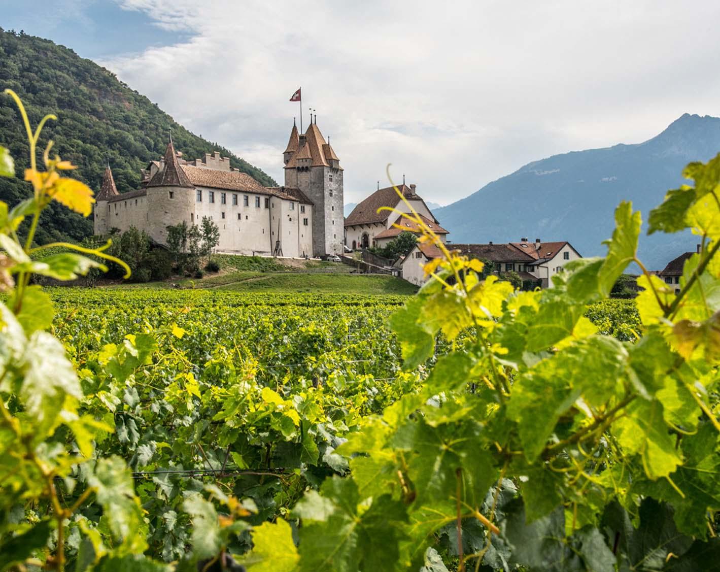 01c35e105986ee Maxivue   aigle-optique-du-centre-moret   vaud  Suisse romande